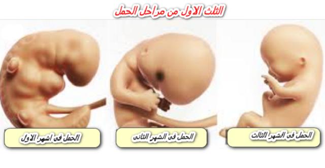 رجيم للحامل ينحف 5 كيلو في الأسبوع بسهولة ويسر رجيم الحمل في الشهر الثاني