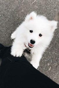 تفسير حلم الكلاب البيضاء في المنام مجلة رجيم