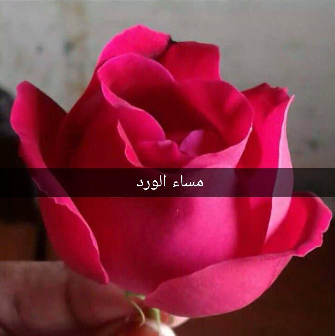 صور رسائل مساء الورد